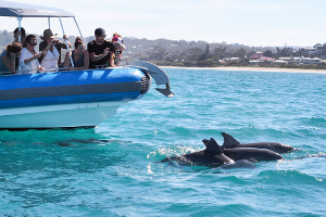 Dolphins Boat Tour