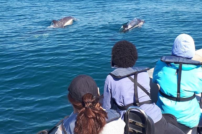 dolphin_lisbon_770x513_1