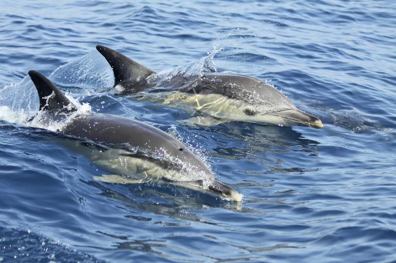 dolphin_lisbon_770x513_2
