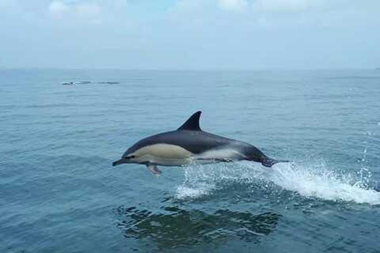 dolphin_lisbon_770x513_3