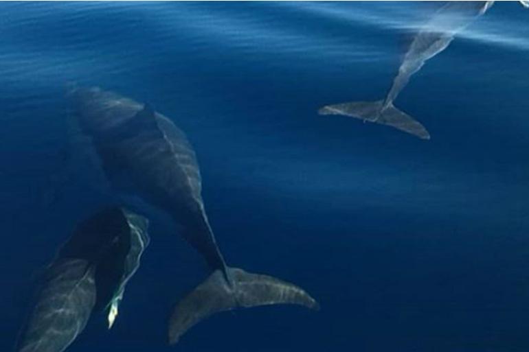 dolphin_lisbon_770x513_5